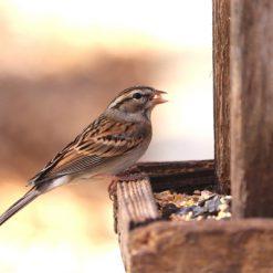 Bird care and wildlife